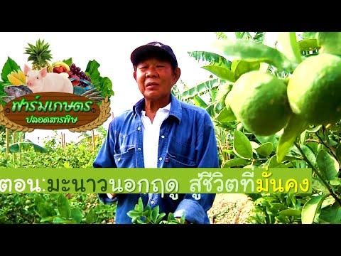 รายการ ฟาร์มเกษตรปลอดสารพิษ11 ตอน มะนาวนอกฤดู สู่ชีวิตที่มั่นคง