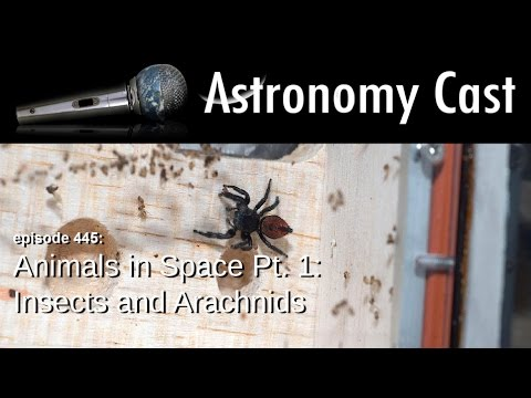 Astronomy Cast Ep. 445: Animals in Space Pt. 1: Insects and Arachnids