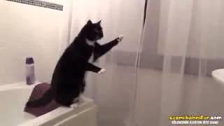 Aynada Kendini Görüp Kedi Olduğuna İnanamayan Kedi