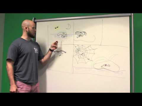 BIOL 1510: Fish-eating Spiders (Team 6, Summer 201
