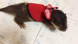 Stop The Otter Baby Trade | Mua Rái Cá Con Là Bắt Cóc Trẻ Em - Tiun