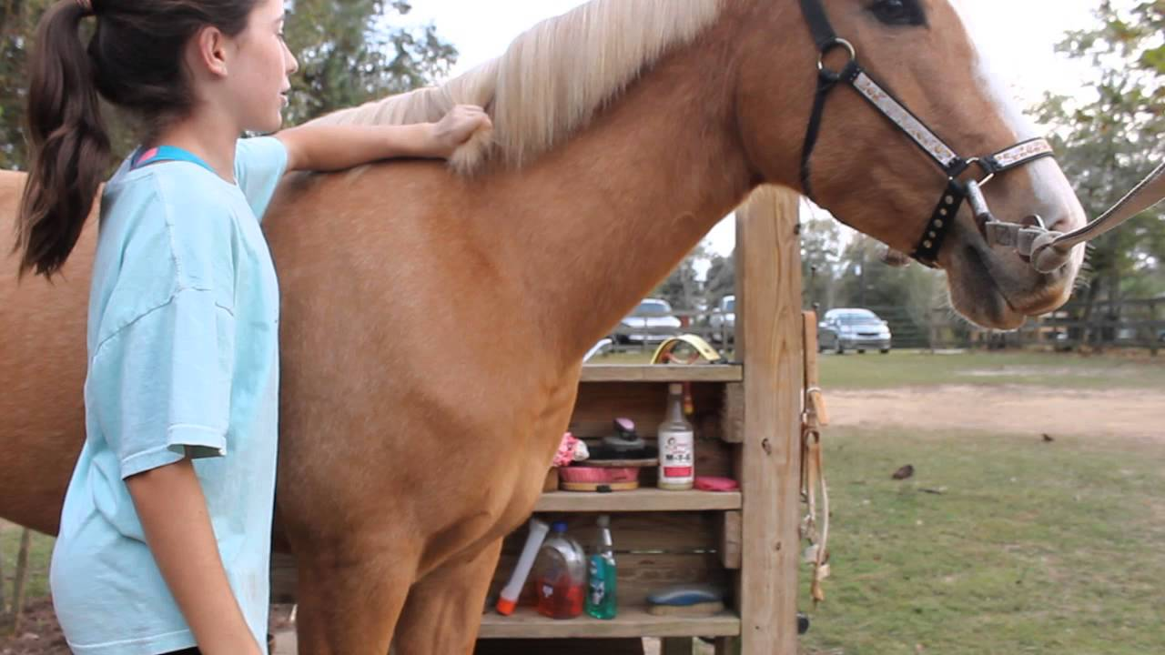 how to become a groom for horses