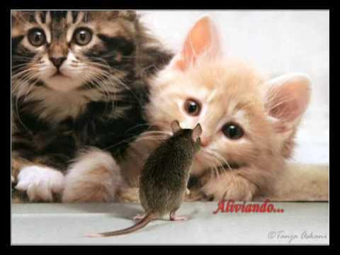 Animais Engraçados - Funny Animals