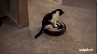 Aspiradoras y gatos