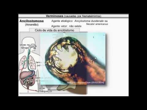 Verminoses causadas por nematelmintos