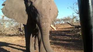 Elephant Tries to Scare Me