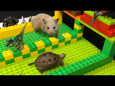 My Funny Pet Hamster vs Tortoise in Lego Hamster Race Obstacle Course
