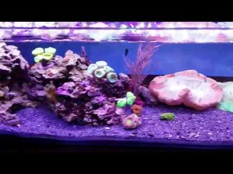 got2envy's 12g long nano reef update 6/22/14