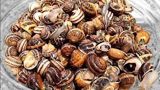 Aprende a limpiar caracoles