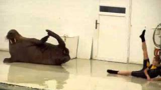 Funny Walrus Exercise Routine