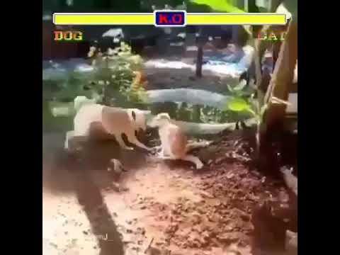 DOG VS CAT | STREET FIGHTING |FUNNY CLIP
