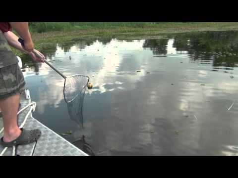 Catching catfish on jug lines in south louisiana youtube for Jug line fishing