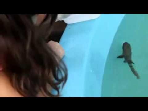 Nasce filhote de tubarão-lixa em cativeiro