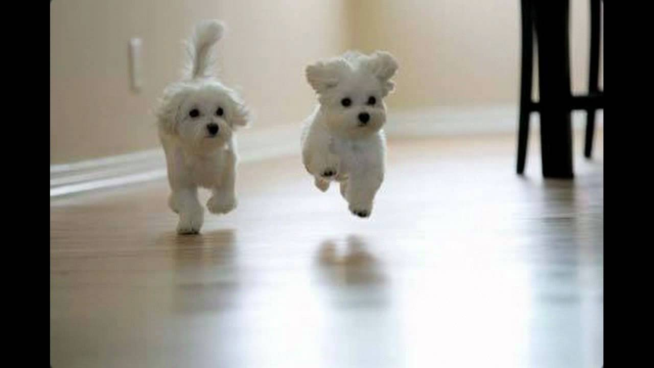 Schattige Honden Youtube