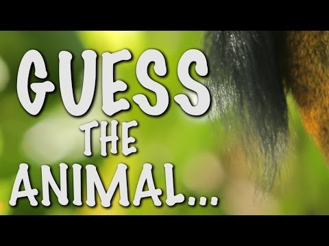 Can you guess the animal? - Brazil World Cup Special - Earth Unplugged