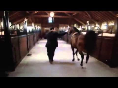 Mooiste paard ter wereld komt uit belgi youtube - De thuisbasis van de wereld chesterfield ...