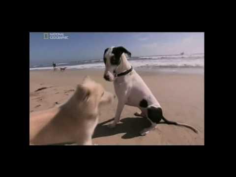 Znalec psej duše - Veľký diktátor