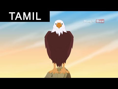 The Eagle and the Turtle - Animated cartoon stories