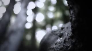 ERYN NON DAE - Hidden Lotus