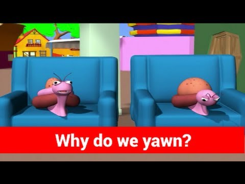 Why do I yawn? Tell Me Why Kids Video Show in 3D Animation