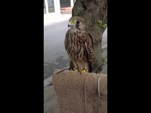 Chú chim thông minh!!!