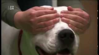 Veda o psoch