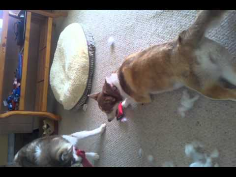 Peter and Lola gut a dog proof toy