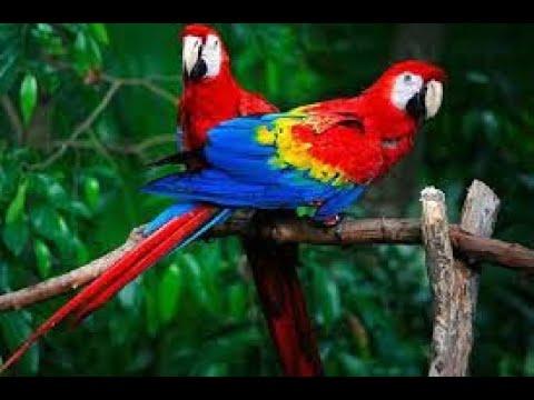 Nhạc không lời  VOL 9 ( LK DISCO ) - Organ - Slide show(Stcb)