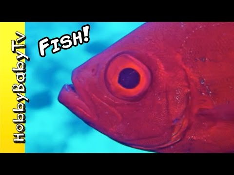 REAL SURPRISE FISH! Learn Colors with Fishy's Puzzle + Fun with HobbyKids of HobbyBabyTV