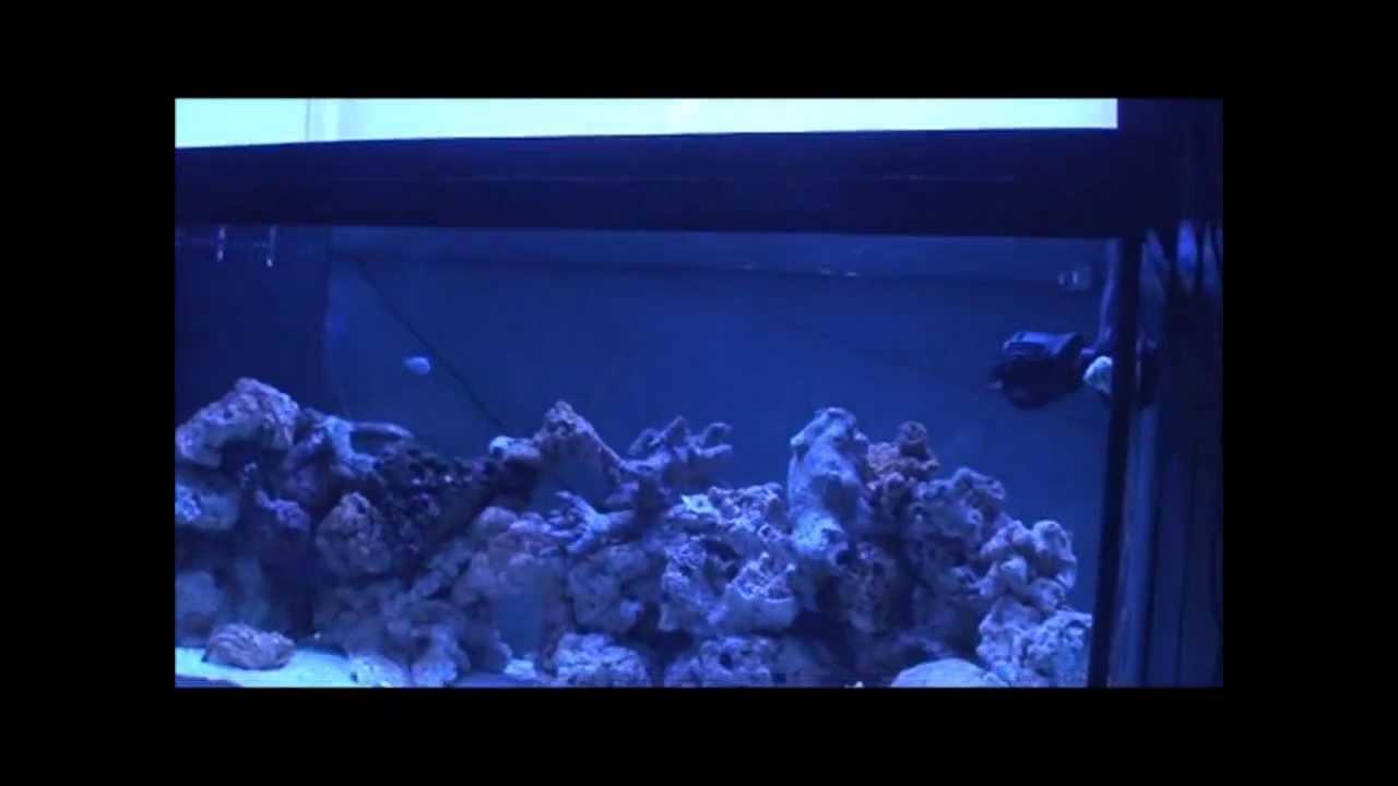 Aqua Culture LED Aquarium Hood