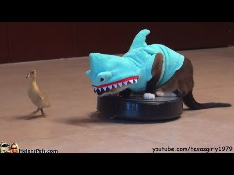 Thumbnail image for 'Cat In A Shark Costume Chases A Duck While Riding A Roomba'