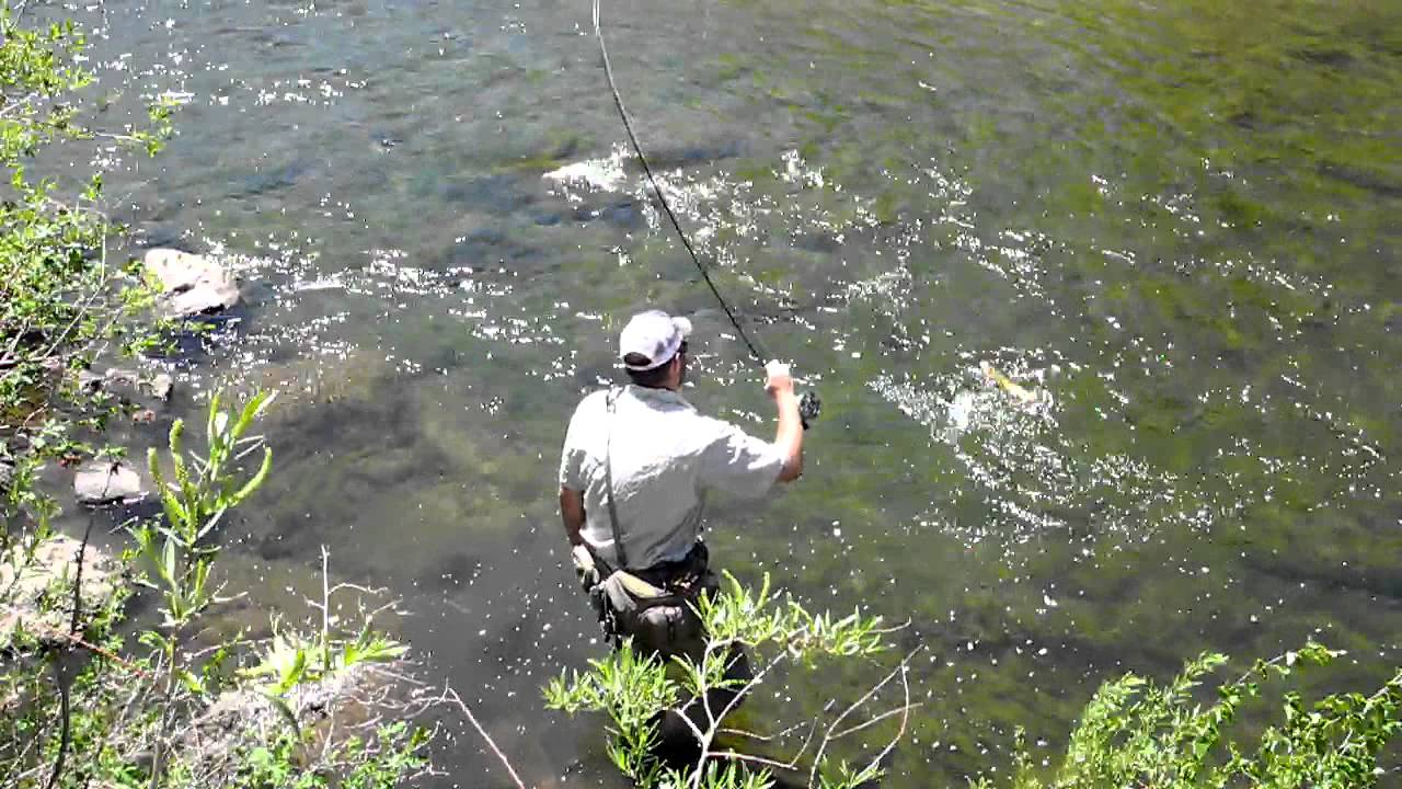 Elevenmile Canyon Dry Fly Fishing 11 Mile Canyon Tricos