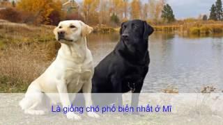 10 giống chó được nuôi phổ biến nhất tại Việt Nam