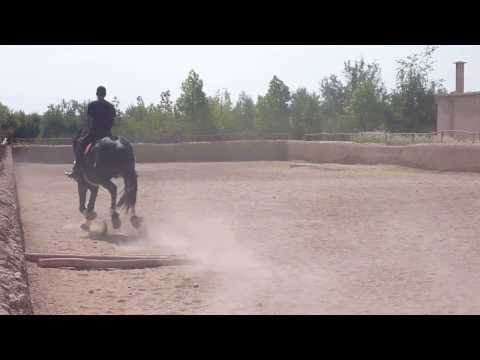 MOROCCO - Morocco Horse Riding | Morocco Travel - Vacation, Tourism, Holidays  [HD]