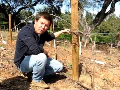 Poda de la Vid (El Campito) - Pruning Vine Grapes (Subtitles in English)