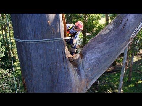 Alfred Nicholas Gardens Tree Removal