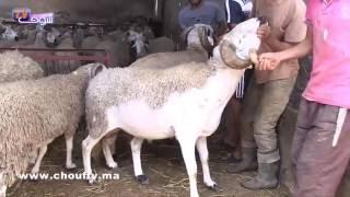 ضربة للأبناك : مغاربة يشترون الحولي بالكريدي من عند الكسابة | روبورتاج