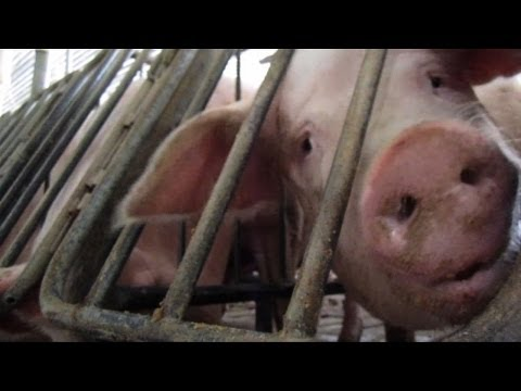 Ag-Gag Anti-Whistleblower Bills: Keeping Americans in the Dark
