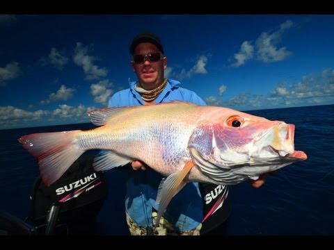Barrier Reef Big fish Kaos
