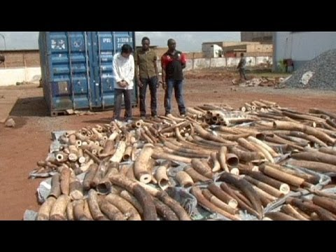 Ivory smuggling operation foiled in Togo