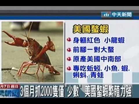 美國螯蝦入侵!公園生態池面臨危機