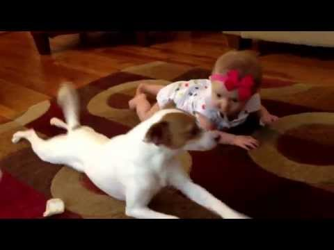 This Smart Puppy Teach Baby Girl How To Crawl