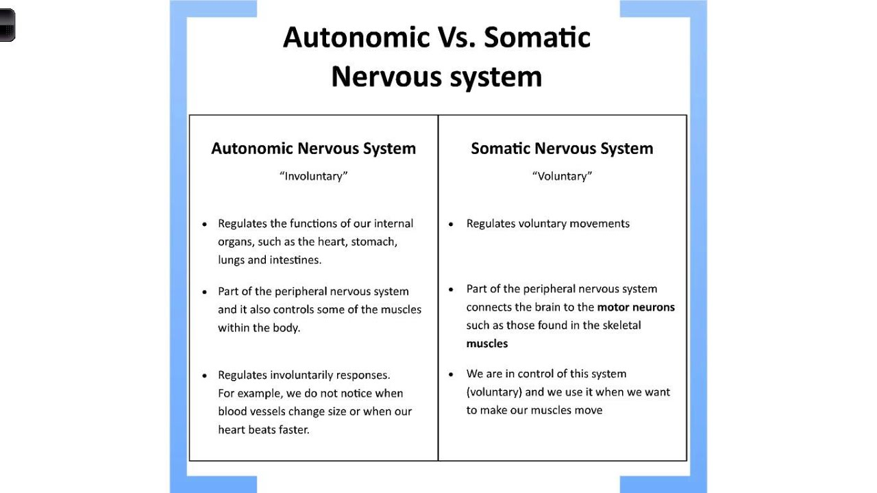 Autonomic vs Somatic Nervous System - YouTube | 1280 x 720 jpeg 91kB
