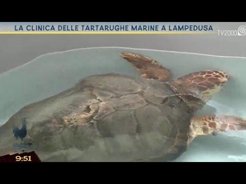La clinica delle tartarughe marine a Lampedusa