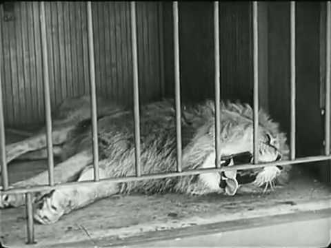Charlie Chaplin vs lion