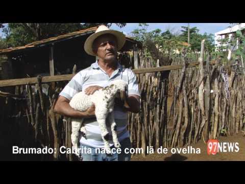 BRUMADO-CABRITA NASCE COM LÂ DE OVELHA
