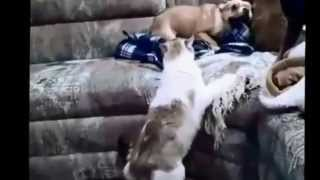 [Cats vs Dogs fights FUNNY 2013]