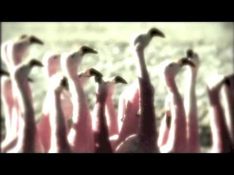 An Environmental Awareness Film