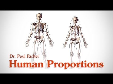 Human Figure Proportions - Average Figures - Dr. Paul Richer