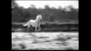 antonella ruggiero feat scisma - cavallo bianco (registrazioni moderne 1997) view on youtube.com tube online.